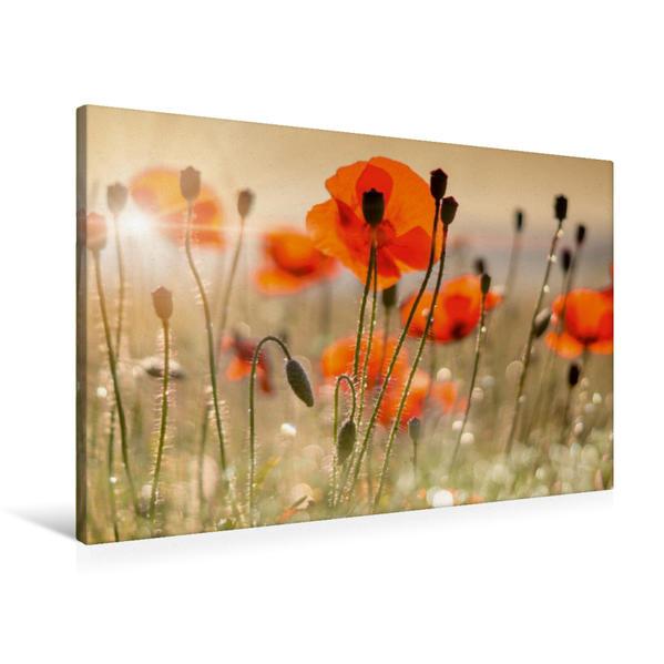 Premium Textil-Leinwand 90 cm x 60 cm quer, Mohnblumen   Wandbild, Bild auf Keilrahmen, Fertigbild auf echter Leinwand, Leinwanddruck - Coverbild