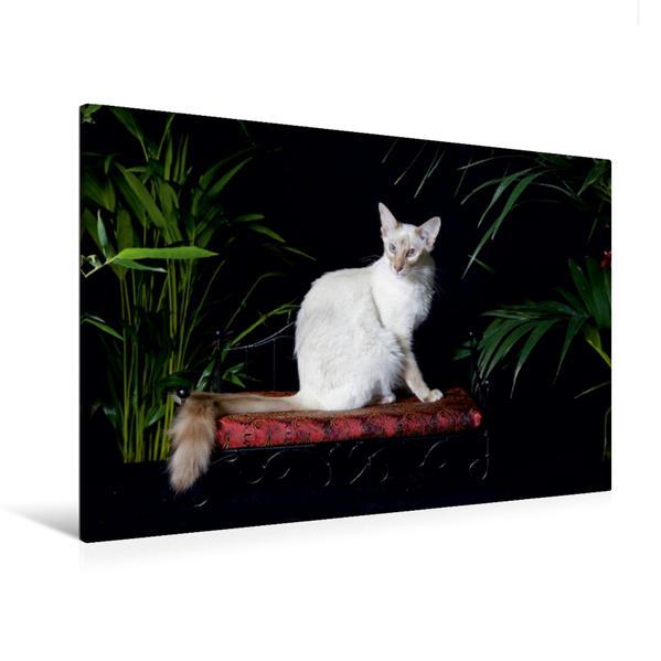 Premium Textil-Leinwand 120 cm x 80 cm quer, Ein Motiv aus dem Kalender Balinesen - Orientalische Schönheiten | Wandbild, Bild auf Keilrahmen, Fertigbild auf echter Leinwand, Leinwanddruck - Coverbild