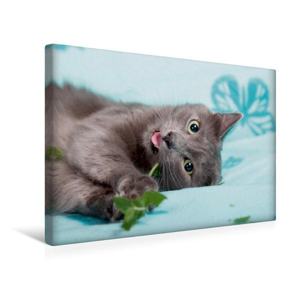 Premium Textil-Leinwand 45 cm x 30 cm quer, Ein Motiv aus dem Kalender Nebelung Katzen   Wandbild, Bild auf Keilrahmen, Fertigbild auf echter Leinwand, Leinwanddruck - Coverbild