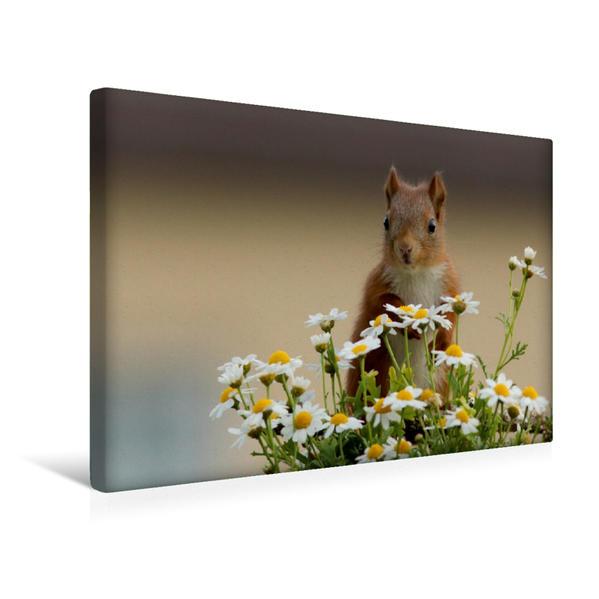 Premium Textil-Leinwand 45 cm x 30 cm quer, Besondere Augenblicke mit Eichhörnchen - Nachwuchs mit neugierigem Blick | Wandbild, Bild auf Keilrahmen, Fertigbild auf echter Leinwand, Leinwanddruck - Coverbild