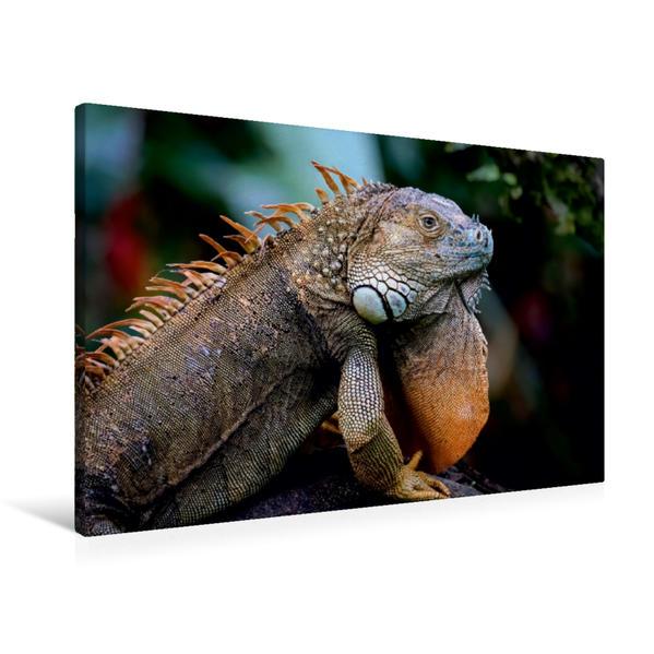 Premium Textil-Leinwand 90 cm x 60 cm quer, Grüner Leguan (Iguana iguana)   Wandbild, Bild auf Keilrahmen, Fertigbild auf echter Leinwand, Leinwanddruck - Coverbild