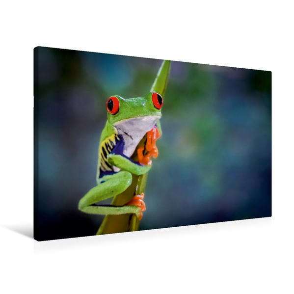 Premium Textil-Leinwand 90 cm x 60 cm quer, Rotaugenlaubfrosch (Agalychnis callidryas) | Wandbild, Bild auf Keilrahmen, Fertigbild auf echter Leinwand, Leinwanddruck - Coverbild