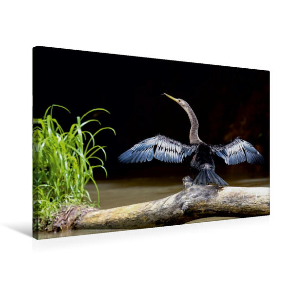 Premium Textil-Leinwand 75 cm x 50 cm quer, Schlangenhalsvogel (Anhinga anhinga) | Wandbild, Bild auf Keilrahmen, Fertigbild auf echter Leinwand, Leinwanddruck - Coverbild