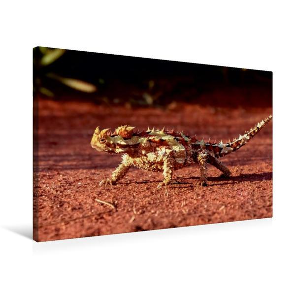 Premium Textil-Leinwand 75 cm x 50 cm quer, Ein Motiv aus dem Kalender Australien  tierisch gut  2017 | Wandbild, Bild auf Keilrahmen, Fertigbild auf echter Leinwand, Leinwanddruck - Coverbild