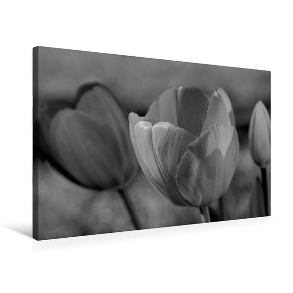 Premium Textil-Leinwand 75 cm x 50 cm quer, Tulpen - Blumen des Frühlings | Wandbild, Bild auf Keilrahmen, Fertigbild auf echter Leinwand, Leinwanddruck - Coverbild