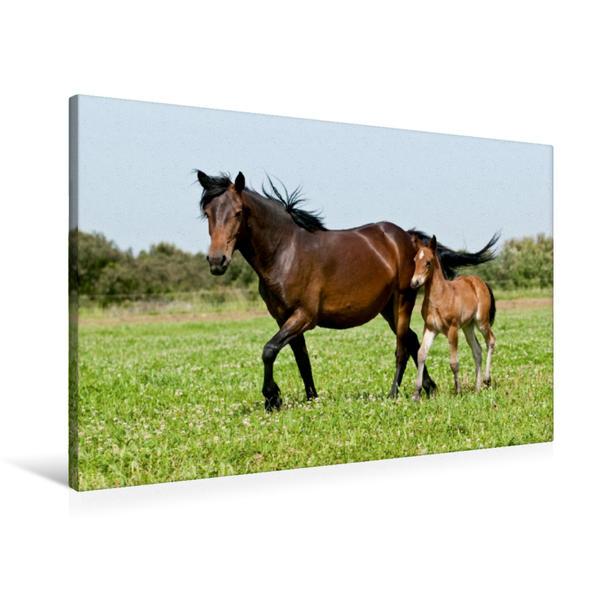Premium Textil-Leinwand 90 cm x 60 cm quer, Barraquand Pferde | Wandbild, Bild auf Keilrahmen, Fertigbild auf echter Leinwand, Leinwanddruck - Coverbild