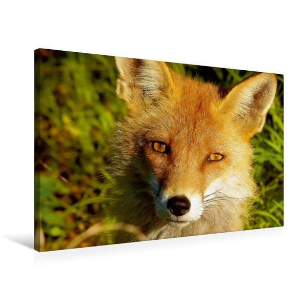 Premium Textil-Leinwand 75 cm x 50 cm quer, Portrait von Fuchsmama | Wandbild, Bild auf Keilrahmen, Fertigbild auf echter Leinwand, Leinwanddruck - Coverbild