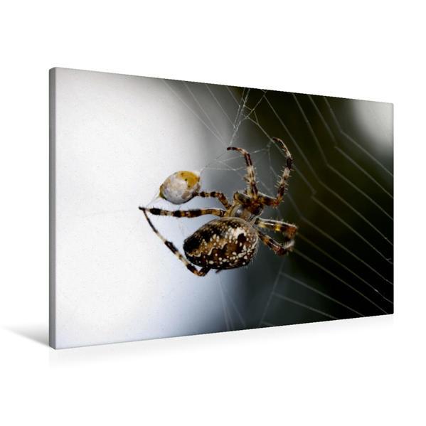 Premium Textil-Leinwand 90 cm x 60 cm quer, Kreuzspinne | Wandbild, Bild auf Keilrahmen, Fertigbild auf echter Leinwand, Leinwanddruck - Coverbild