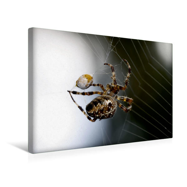 Premium Textil-Leinwand 45 cm x 30 cm quer, Kreuzspinne | Wandbild, Bild auf Keilrahmen, Fertigbild auf echter Leinwand, Leinwanddruck - Coverbild