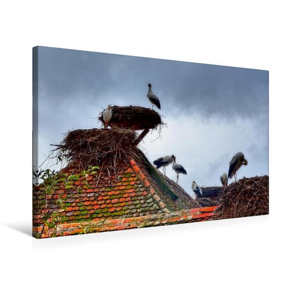 Premium Textil-Leinwand 75 cm x 50 cm quer, Störche in Salem, Affenberg | Wandbild, Bild auf Keilrahmen, Fertigbild auf echter Leinwand, Leinwanddruck - Coverbild
