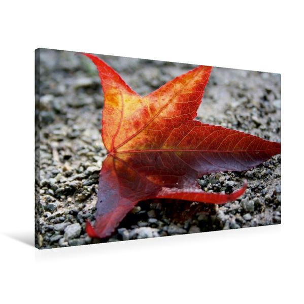 Premium Textil-Leinwand 90 cm x 60 cm quer, Herbstblatt im Sonnenlicht | Wandbild, Bild auf Keilrahmen, Fertigbild auf echter Leinwand, Leinwanddruck - Coverbild