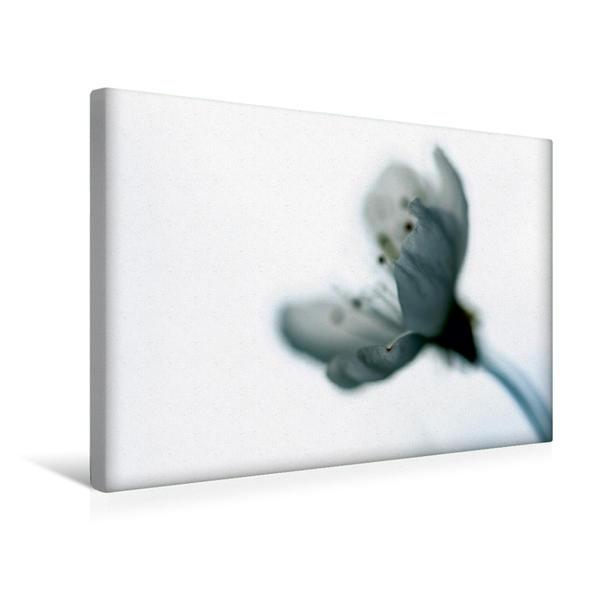 Premium Textil-Leinwand 45 cm x 30 cm quer, Kirschblüte   Wandbild, Bild auf Keilrahmen, Fertigbild auf echter Leinwand, Leinwanddruck - Coverbild
