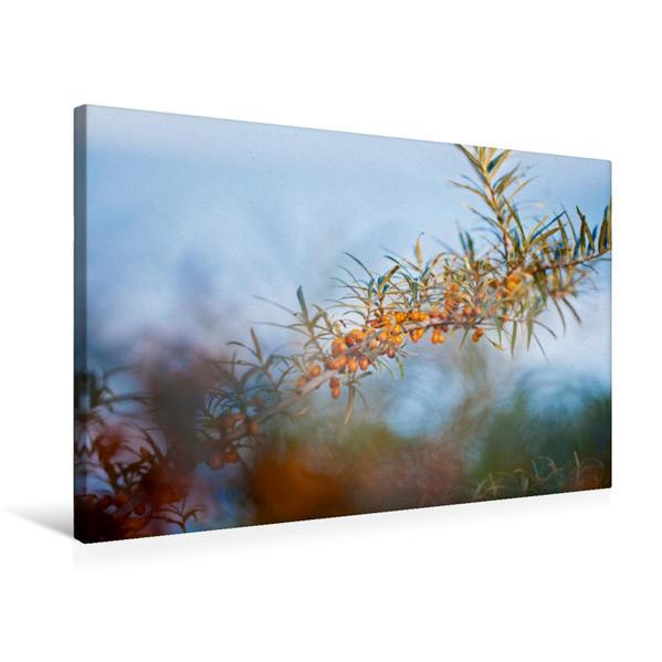 Premium Textil-Leinwand 75 cm x 50 cm quer, Sanddorn | Wandbild, Bild auf Keilrahmen, Fertigbild auf echter Leinwand, Leinwanddruck - Coverbild