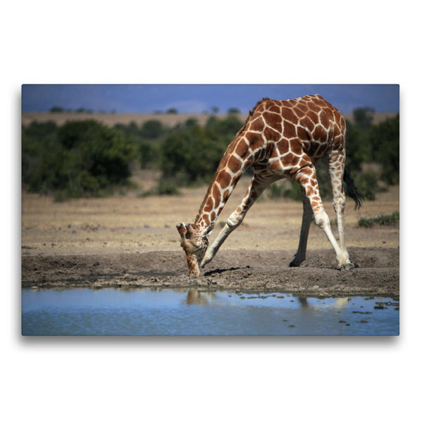 Premium Textil-Leinwand 75 cm x 50 cm quer, Giraffen – Im Flussbett | Wandbild, Bild auf Keilrahmen, Fertigbild auf echter Leinwand, Leinwanddruck - Coverbild