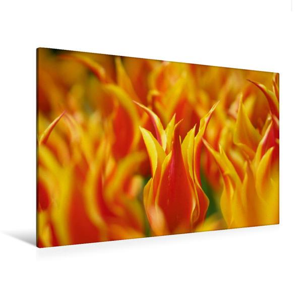 Premium Textil-Leinwand 120 cm x 80 cm quer, Tulpen in Flammen | Wandbild, Bild auf Keilrahmen, Fertigbild auf echter Leinwand, Leinwanddruck - Coverbild