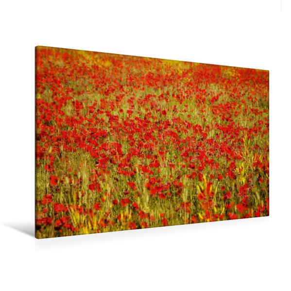 Premium Textil-Leinwand 120 cm x 80 cm quer, Mohnblumen | Wandbild, Bild auf Keilrahmen, Fertigbild auf echter Leinwand, Leinwanddruck - Coverbild