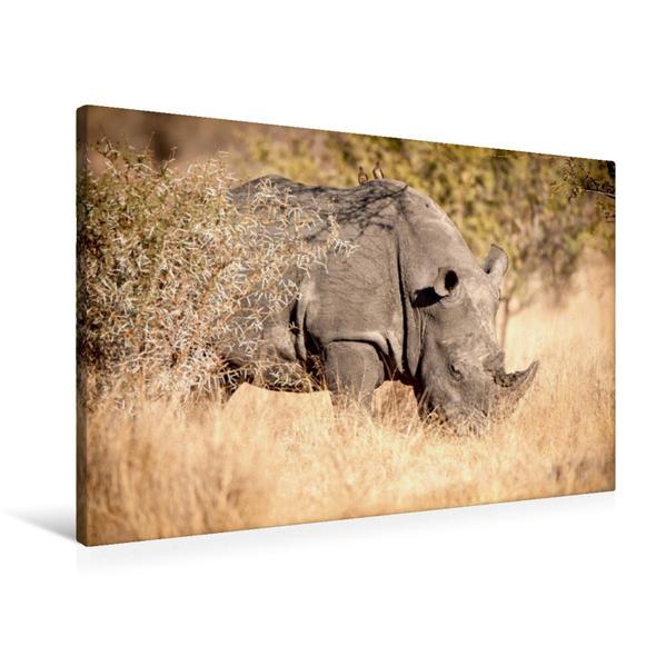 Premium Textil-Leinwand 90 cm x 60 cm quer, Nashorn im Grasland | Wandbild, Bild auf Keilrahmen, Fertigbild auf echter Leinwand, Leinwanddruck - Coverbild