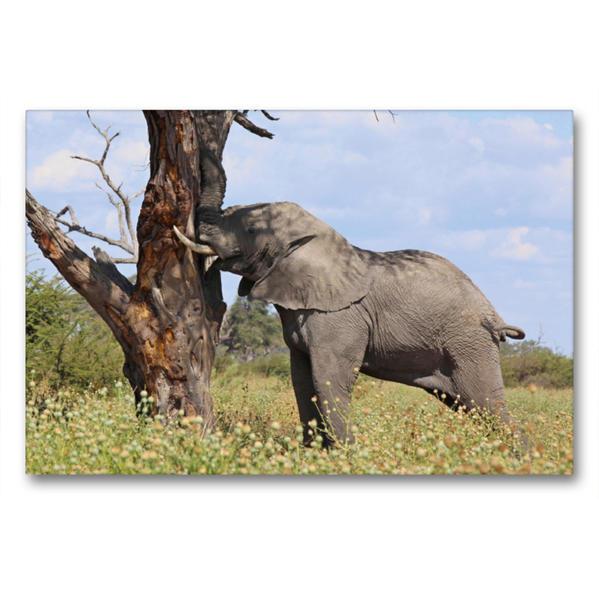 Premium Textil-Leinwand 90 cm x 60 cm quer, Elefanten – Kräftemessen | Wandbild, Bild auf Keilrahmen, Fertigbild auf echter Leinwand, Leinwanddruck - Coverbild