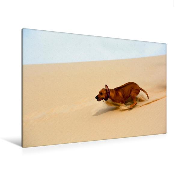 Premium Textil-Leinwand 120 cm x 80 cm quer, Sandrennen. | Wandbild, Bild auf Keilrahmen, Fertigbild auf echter Leinwand, Leinwanddruck - Coverbild