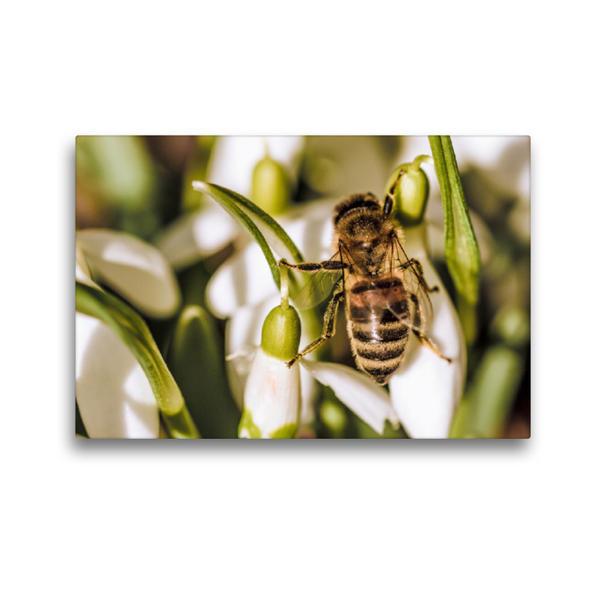Premium Textil-Leinwand 45 cm x 30 cm quer, Ein Motiv aus dem Kalender Tierischer Garten | Wandbild, Bild auf Keilrahmen, Fertigbild auf echter Leinwand, Leinwanddruck - Coverbild
