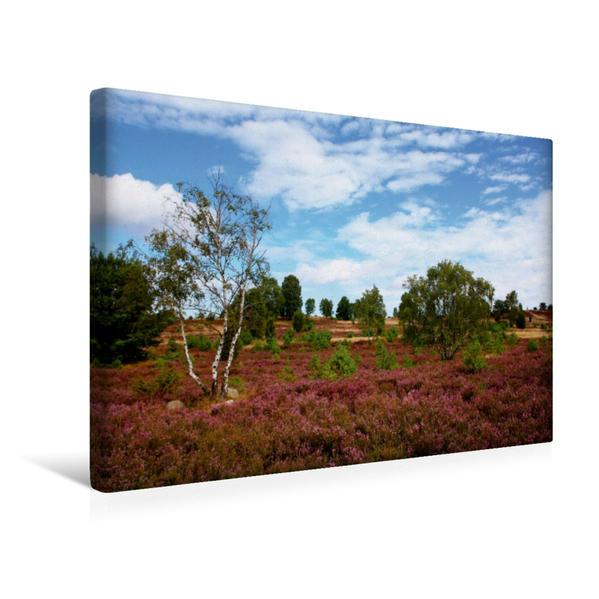 Premium Textil-Leinwand 45 cm x 30 cm quer, Ein Motiv aus dem Kalender Die Heide blüht   Wandbild, Bild auf Keilrahmen, Fertigbild auf echter Leinwand, Leinwanddruck - Coverbild
