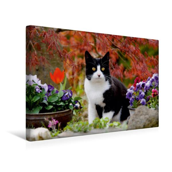 Premium Textil-Leinwand 45 cm x 30 cm quer, Schwarz-weiße Katze im blühenden Garten | Wandbild, Bild auf Keilrahmen, Fertigbild auf echter Leinwand, Leinwanddruck - Coverbild