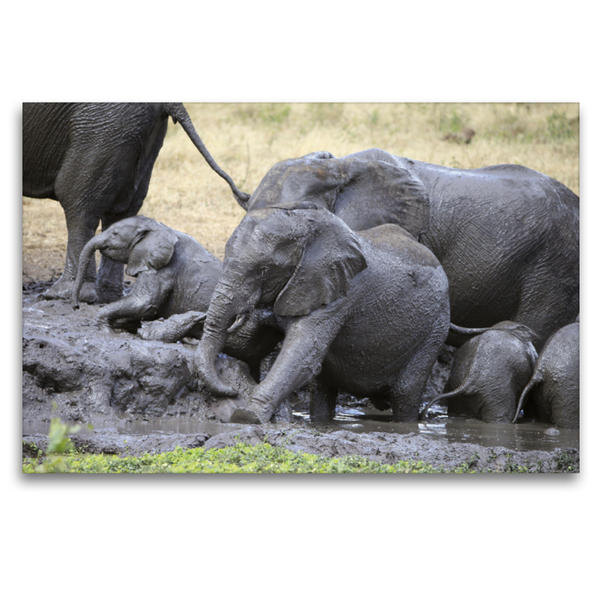Premium Textil-Leinwand 120 cm x 80 cm quer, Elefanten – Schlammbad | Wandbild, Bild auf Keilrahmen, Fertigbild auf echter Leinwand, Leinwanddruck - Coverbild