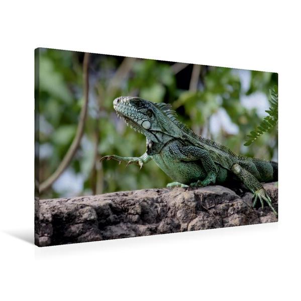 Premium Textil-Leinwand 90 cm x 60 cm quer, Grüner Leguan (Iguana iguana) | Wandbild, Bild auf Keilrahmen, Fertigbild auf echter Leinwand, Leinwanddruck - Coverbild