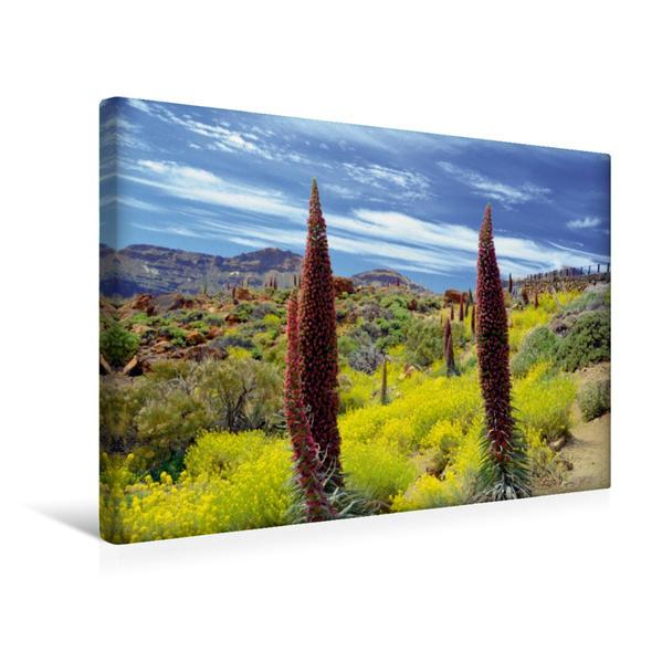 Premium Textil-Leinwand 45 cm x 30 cm quer, Tajjinaste Rojo | Wandbild, Bild auf Keilrahmen, Fertigbild auf echter Leinwand, Leinwanddruck - Coverbild