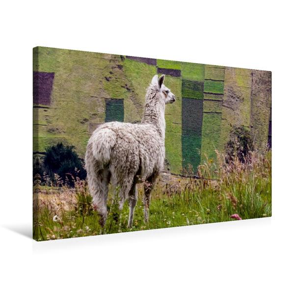 Premium Textil-Leinwand 75 cm x 50 cm quer, Lama | Wandbild, Bild auf Keilrahmen, Fertigbild auf echter Leinwand, Leinwanddruck - Coverbild