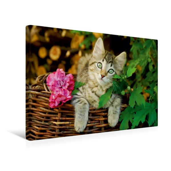 Premium Textil-Leinwand 45 cm x 30 cm quer, Niedliches junges Kätzchen auf einem Weidenkorb | Wandbild, Bild auf Keilrahmen, Fertigbild auf echter Leinwand, Leinwanddruck - Coverbild