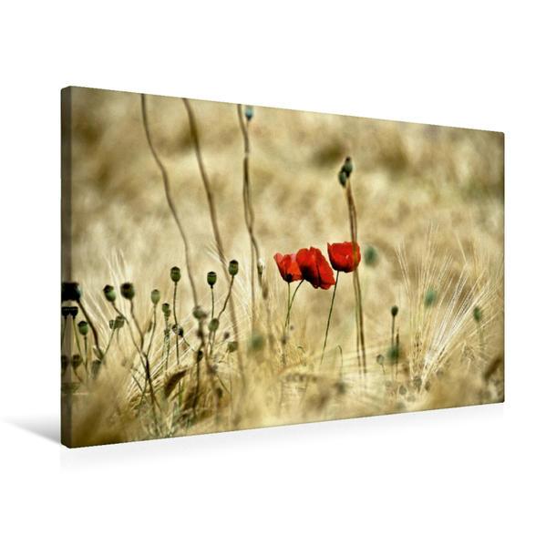 Premium Textil-Leinwand 75 cm x 50 cm quer, RED. Ein Motiv aus dem Kalender Pflanzenträume / Geburtstagskalender   Wandbild, Bild auf Keilrahmen, Fertigbild auf echter Leinwand, Leinwanddruck - Coverbild