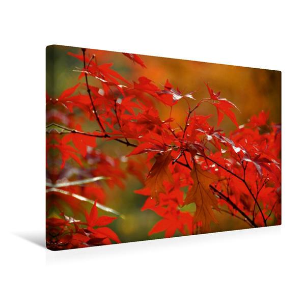 Premium Textil-Leinwand 45 cm x 30 cm quer, Roter Herbst. Ein Motiv aus dem Kalender Pflanzenträume / Geburtstagskalender | Wandbild, Bild auf Keilrahmen, Fertigbild auf echter Leinwand, Leinwanddruck - Coverbild