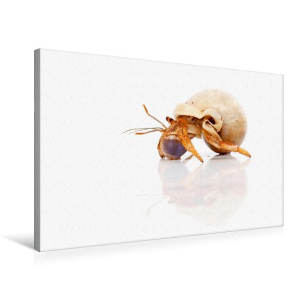 Premium Textil-Leinwand 75 cm x 50 cm quer, Einsiedlerkrebs | Wandbild, Bild auf Keilrahmen, Fertigbild auf echter Leinwand, Leinwanddruck - Coverbild