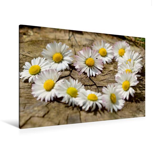Premium Textil-Leinwand 120 cm x 80 cm quer, Herz aus Blumen   Wandbild, Bild auf Keilrahmen, Fertigbild auf echter Leinwand, Leinwanddruck - Coverbild
