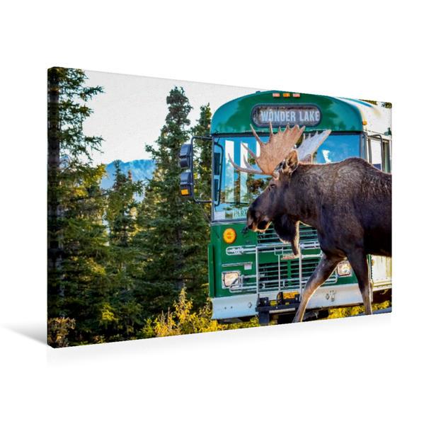 Premium Textil-Leinwand 75 cm x 50 cm quer, Elchbulle im  Denali National Park | Wandbild, Bild auf Keilrahmen, Fertigbild auf echter Leinwand, Leinwanddruck - Coverbild