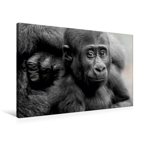 Premium Textil-Leinwand 90 cm x 60 cm quer, Gorilla SAWA | Wandbild, Bild auf Keilrahmen, Fertigbild auf echter Leinwand, Leinwanddruck - Coverbild