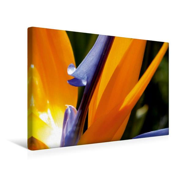 Premium Textil-Leinwand 45 cm x 30 cm quer, Strelitzie | Wandbild, Bild auf Keilrahmen, Fertigbild auf echter Leinwand, Leinwanddruck - Coverbild