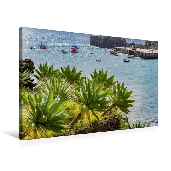 Premium Textil-Leinwand 75 cm x 50 cm quer, Agaven an der Küste im Hafen von Funchal der portugiesischen Insel Madeira | Wandbild, Bild auf Keilrahmen, Fertigbild auf echter Leinwand, Leinwanddruck - Coverbild