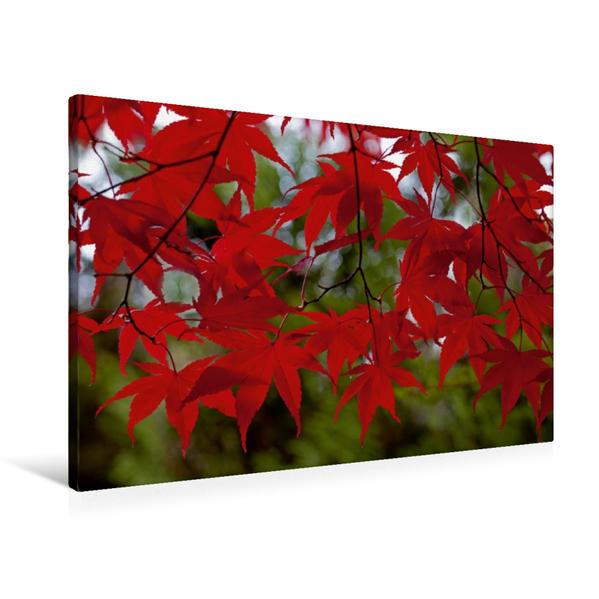 Premium Textil-Leinwand 90 cm x 60 cm quer, R O T ! | Wandbild, Bild auf Keilrahmen, Fertigbild auf echter Leinwand, Leinwanddruck - Coverbild