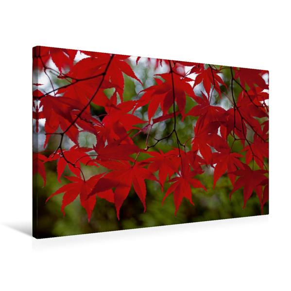 Premium Textil-Leinwand 75 cm x 50 cm quer, R O T ! | Wandbild, Bild auf Keilrahmen, Fertigbild auf echter Leinwand, Leinwanddruck - Coverbild