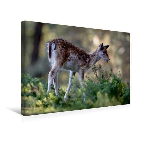 Premium Textil-Leinwand 45 cm x 30 cm quer, Damkitz | Wandbild, Bild auf Keilrahmen, Fertigbild auf echter Leinwand, Leinwanddruck - Coverbild