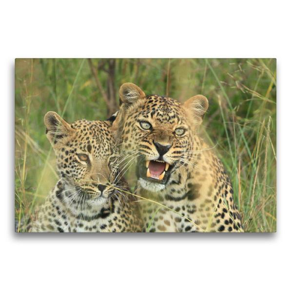 Premium Textil-Leinwand 75 cm x 50 cm quer, Leoparden – Vorsicht! | Wandbild, Bild auf Keilrahmen, Fertigbild auf echter Leinwand, Leinwanddruck - Coverbild