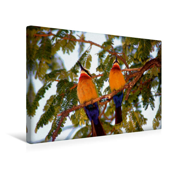 Premium Textil-Leinwand 45 cm x 30 cm quer, Afrikanische Bienenfresser | Wandbild, Bild auf Keilrahmen, Fertigbild auf echter Leinwand, Leinwanddruck - Coverbild