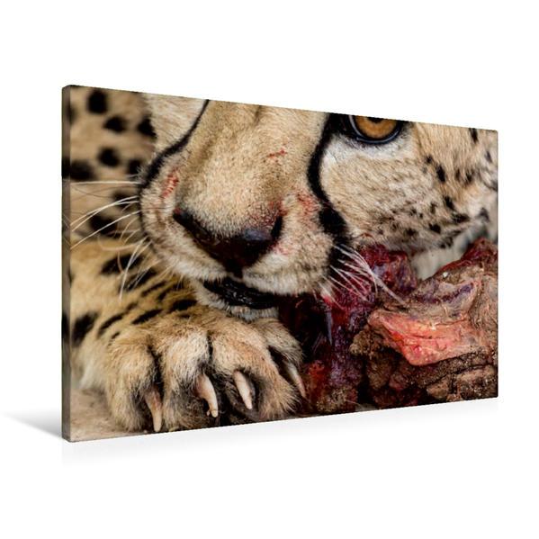 Premium Textil-Leinwand 90 cm x 60 cm quer, Wildes Namibia: Gepard beim Fressen | Wandbild, Bild auf Keilrahmen, Fertigbild auf echter Leinwand, Leinwanddruck - Coverbild
