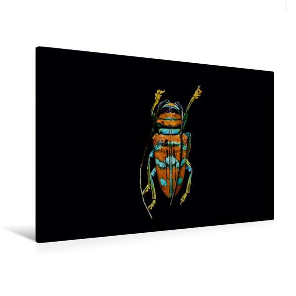 Premium Textil-Leinwand 120 cm x 80 cm quer, Sternotomis pulchra picta | Wandbild, Bild auf Keilrahmen, Fertigbild auf echter Leinwand, Leinwanddruck - Coverbild