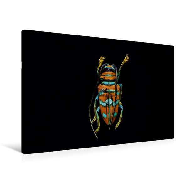 Premium Textil-Leinwand 90 cm x 60 cm quer, Sternotomis pulchra picta | Wandbild, Bild auf Keilrahmen, Fertigbild auf echter Leinwand, Leinwanddruck - Coverbild