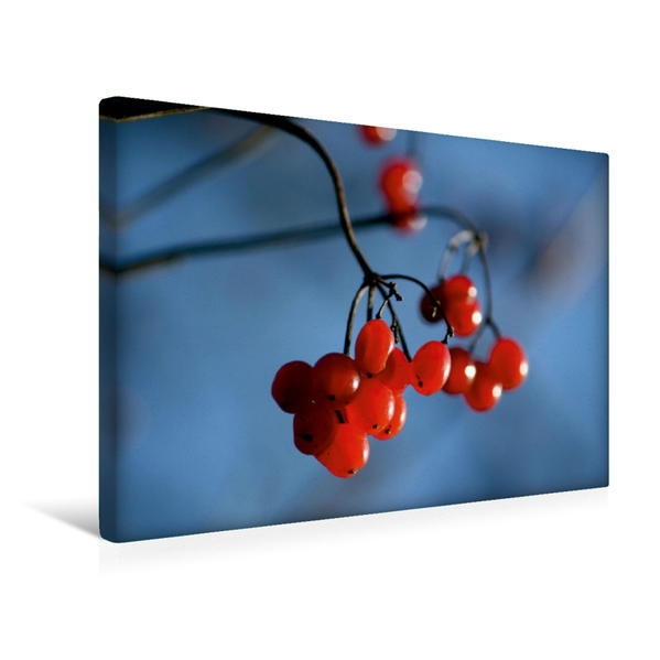 Premium Textil-Leinwand 45 cm x 30 cm quer, Ein Motiv aus dem Kalender Beeren | Wandbild, Bild auf Keilrahmen, Fertigbild auf echter Leinwand, Leinwanddruck - Coverbild
