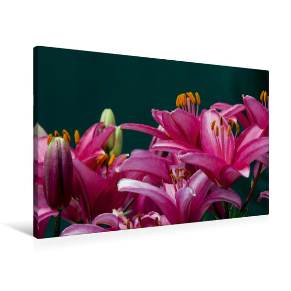 Premium Textil-Leinwand 90 cm x 60 cm quer, Ein Motiv aus dem Kalender Pink Flowers | Wandbild, Bild auf Keilrahmen, Fertigbild auf echter Leinwand, Leinwanddruck - Coverbild
