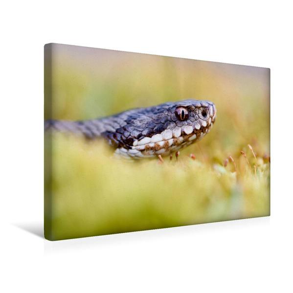 Premium Textil-Leinwand 45 cm x 30 cm quer, Großaufnahme | Wandbild, Bild auf Keilrahmen, Fertigbild auf echter Leinwand, Leinwanddruck - Coverbild